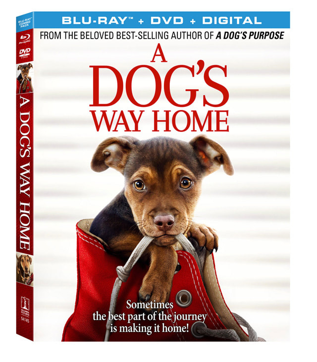 A Dog's Way Home available on Digital HD from Amazon Video and iTunes on March 26, 2019