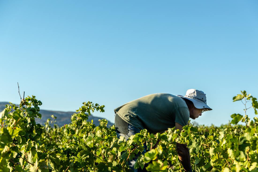 It's time to do more than just say farm workers are essential